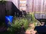 4f338-weeds2bback